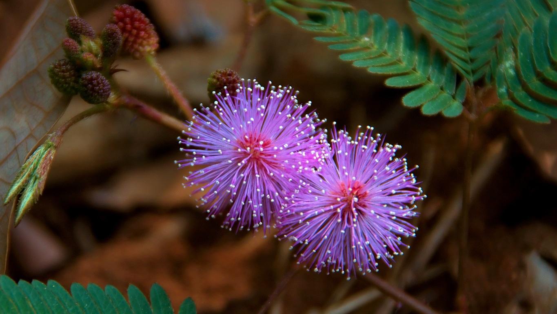 www.raconte-moi-une-image.com/Une fleur ou une guirlande pour l'arbre de Noël ? - Attapady
