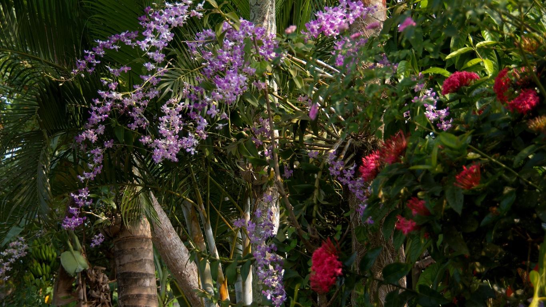 www.raconte-moi-une-image.com/orchidées le long des backwaters