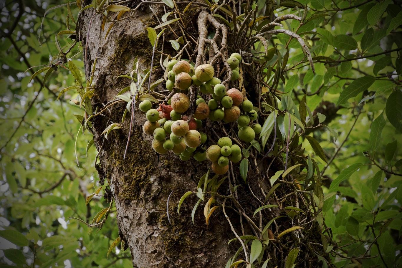 www.raconte-moi-une-image.com/encore ces drôles de figues