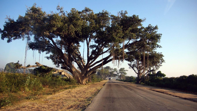 www.raconte-moi-une-image.com/sur la route entre Mudummalai et Mysore