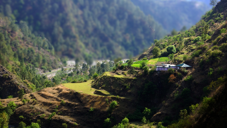 Pâturage en terrasse autour de Chail (Himachal Pradesh)