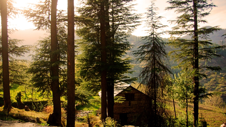 Une petite ferme la route d'accès à Hatu peak (Narkanda, Himachal