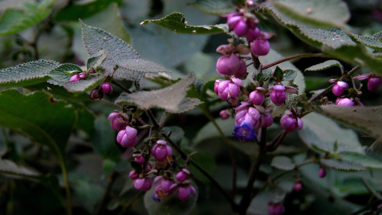 www.raconte-moi-une-image.com/grappe de fleurs sauvages le long des chemins de Attapady