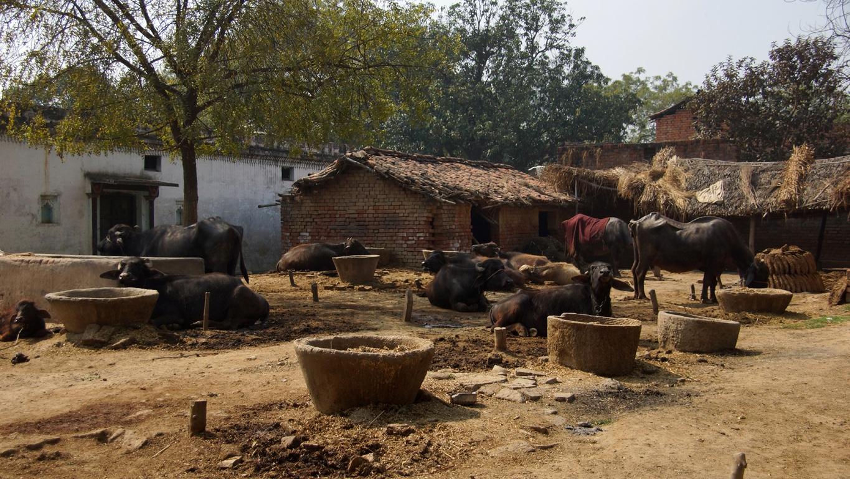 """Un petit village perdu, """"dans son jus"""", aux environs de Varanasi"""
