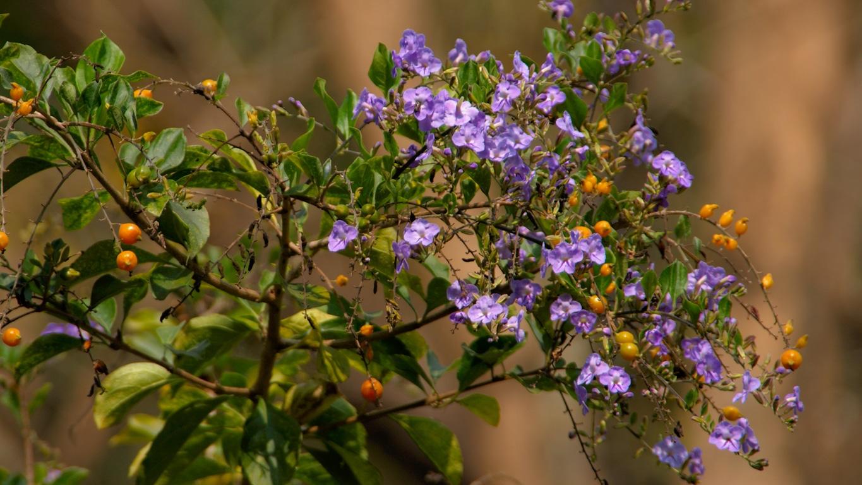 www.raconte-moi-une-image.com/ce fragile arbuste porte en même temps fleurs et fruits