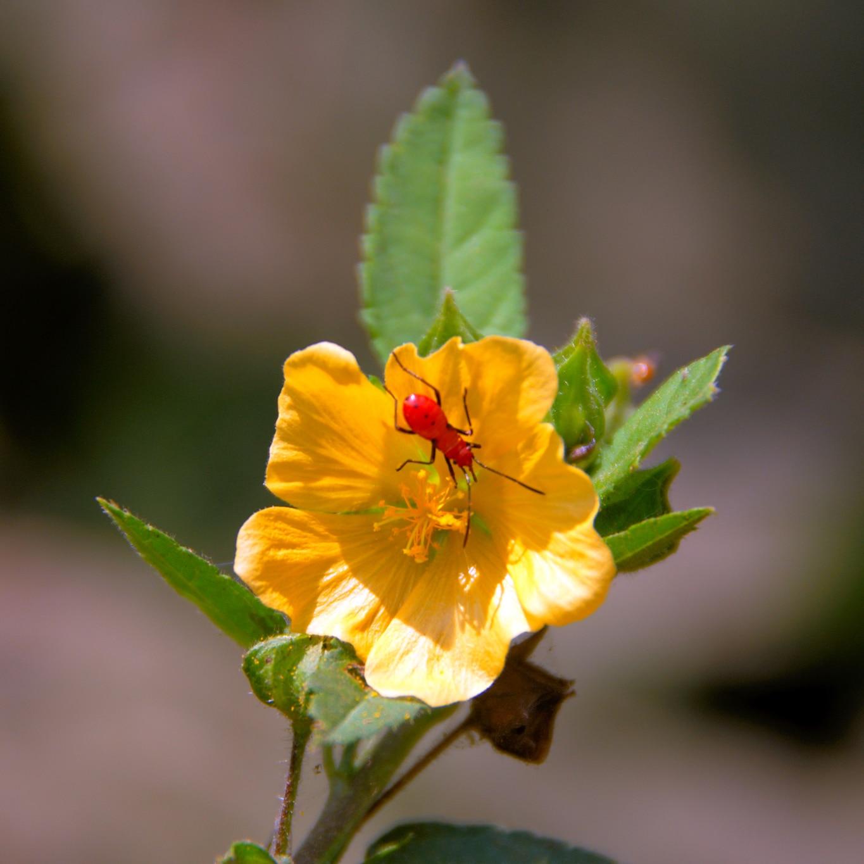 www.raconte-moi-une-image.com/Fort San Angelo à Kannur : lequel de la fleur ou de l'insecte met l'autre en valeur ?
