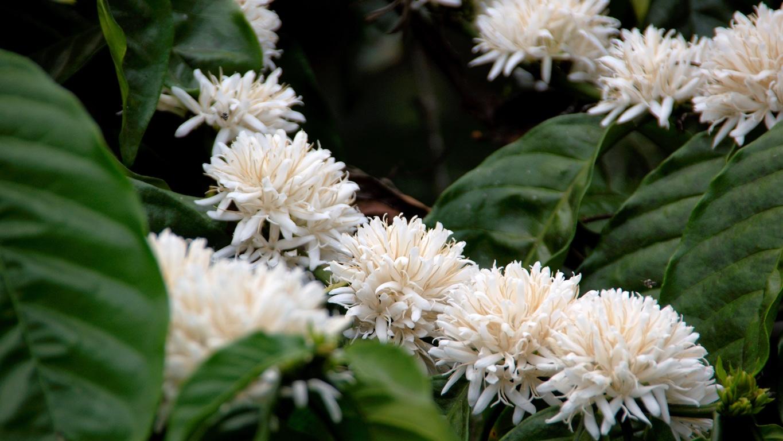 www.raconte-moi-une-image.com/à travers les plantations de café dans le Coorg près de Madikeri