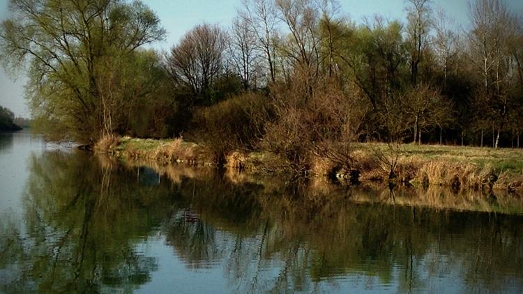 Sérénité du Rhin au matin d'un début de printemps