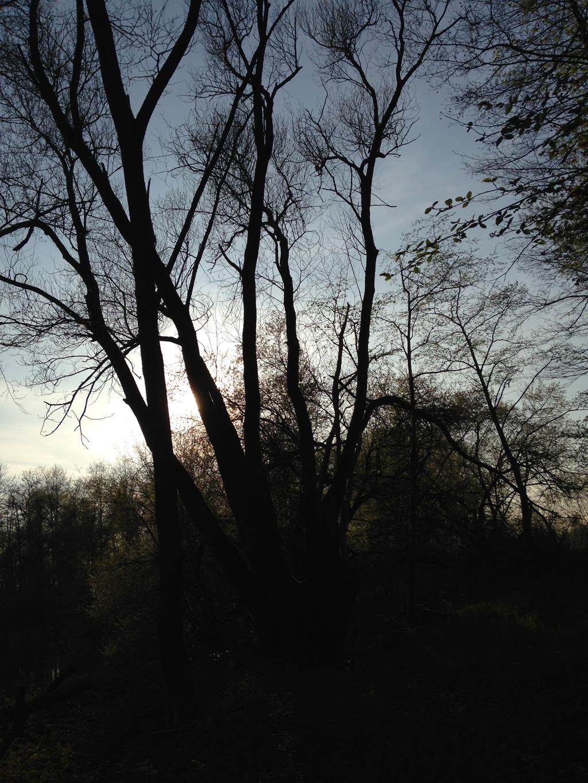 Bords du Rhin un matin de printemps