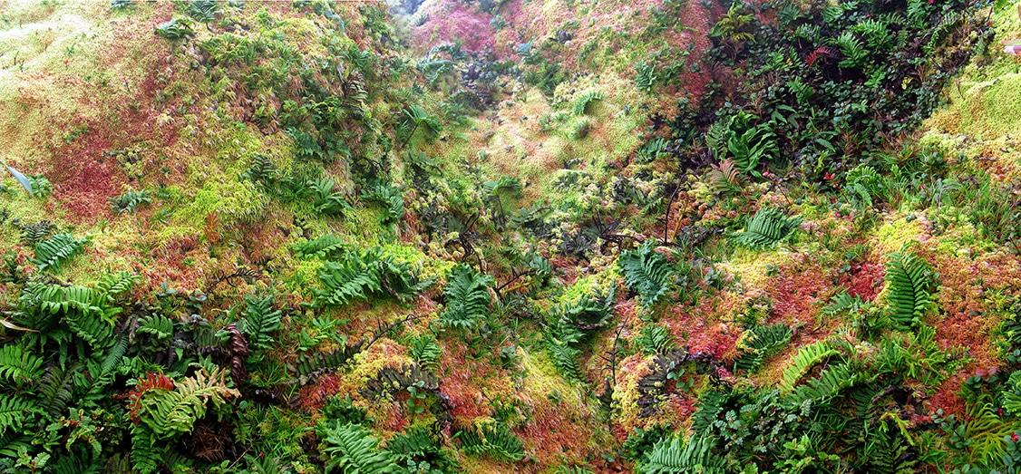 hallucinante-moquette-vegetale- multicolore-sur versant-soufriere-guadeloupe